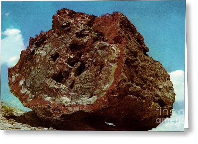 Large Petrified Log  Greeting Card by Ruth  Housley