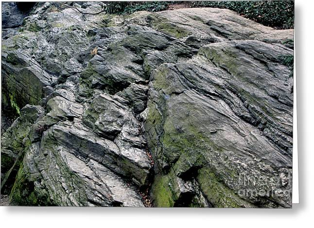 Greeting Card featuring the photograph Large Rock At Central Park by Sandy Moulder
