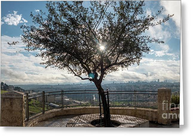 Large Tree Overlooking The City Of Jerusalem Greeting Card