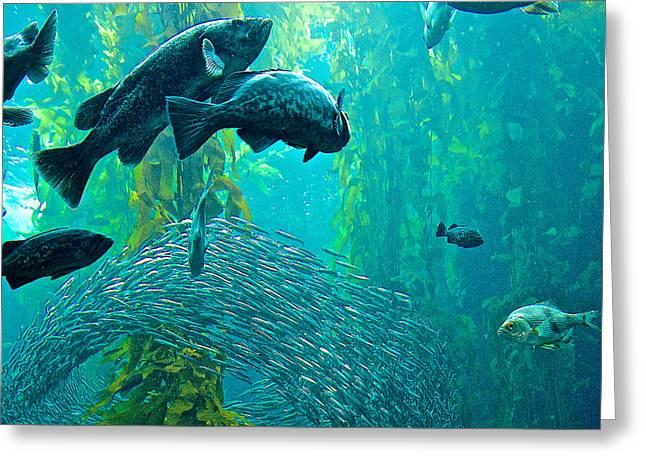 Larger Fish Swim All Around School Of Sardines In Monterey Aquarium-california Greeting Card by Ruth Hager