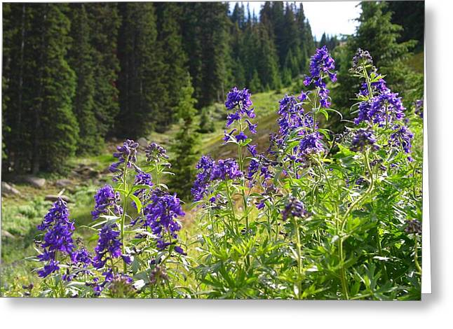 Larkspur Along Trail Ridge Road Greeting Card