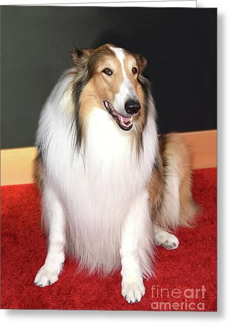 Lassie Greeting Card
