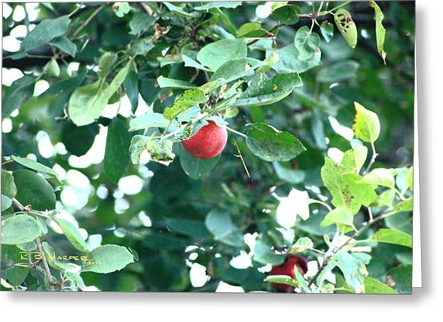 Greeting Card featuring the photograph Last Apple by R B Harper