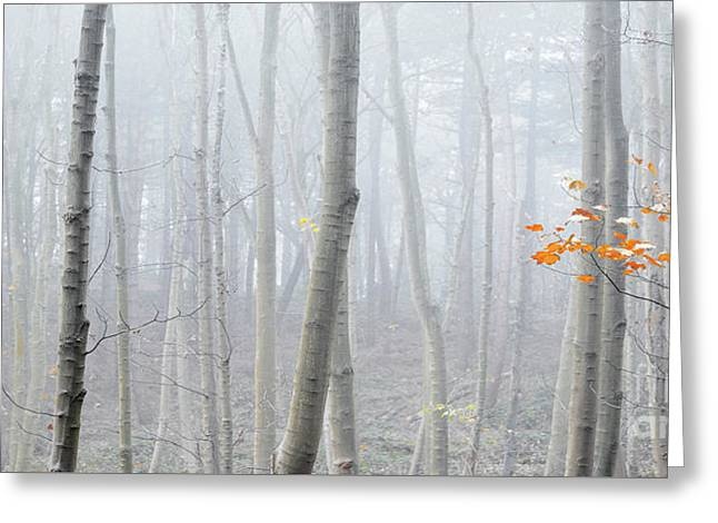 Last Autumn Branch Greeting Card by Svetlana Sewell