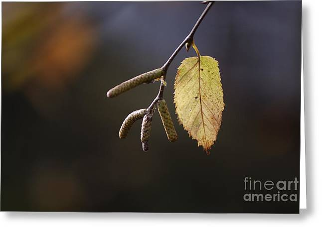 Last Call Of Fall Greeting Card by Randy Bodkins
