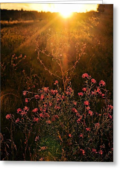 Greeting Card featuring the photograph Last Glimpse Of Light by Jan Amiss Photography