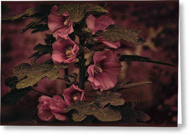 Greeting Card featuring the photograph Last Hollyhock Blooms by Douglas MooreZart