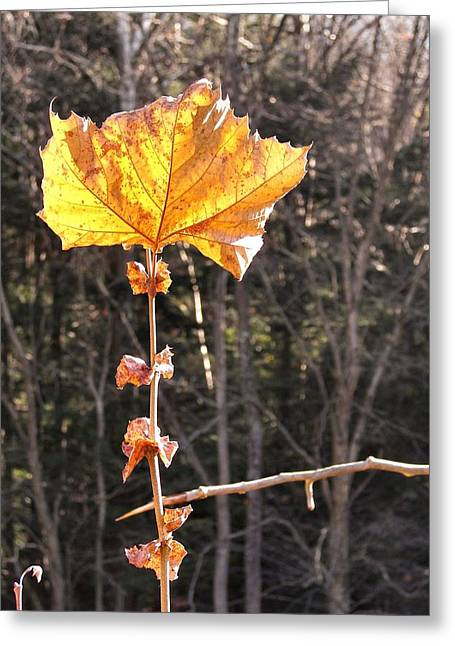 Last Leaf Greeting Card by JAMART Photography