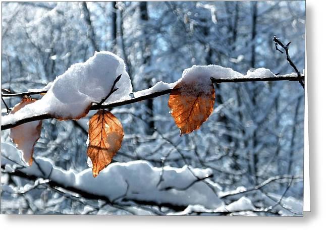 Last Leaves Greeting Card