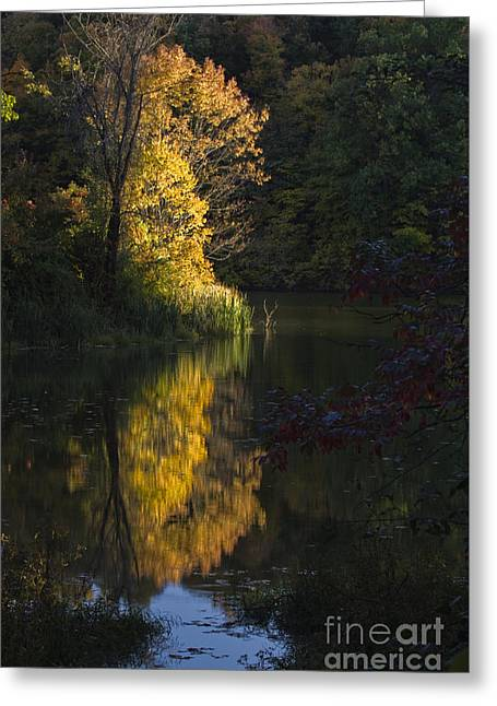 Last Light - D009910 Greeting Card by Daniel Dempster