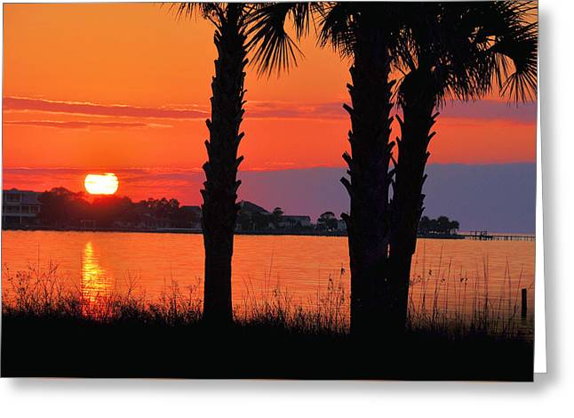 Last Light Greeting Card by Jan Amiss Photography