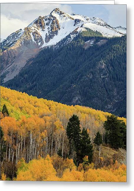 Greeting Card featuring the photograph Last Light Of Autumn Vertical by David Chandler
