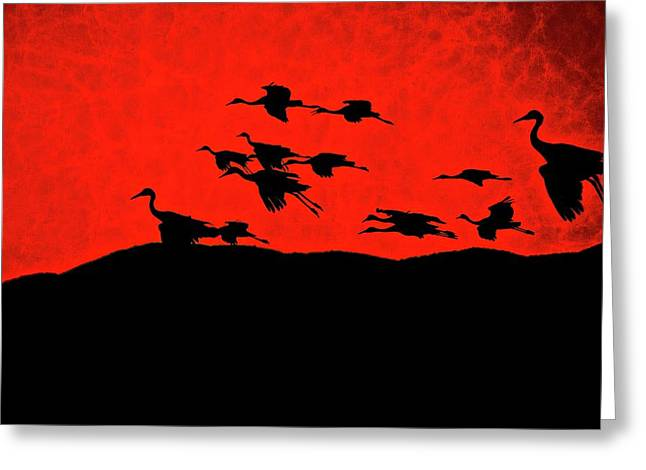 Last Light, Sandhill Cranes, Bosque Del Apache, Nm Greeting Card
