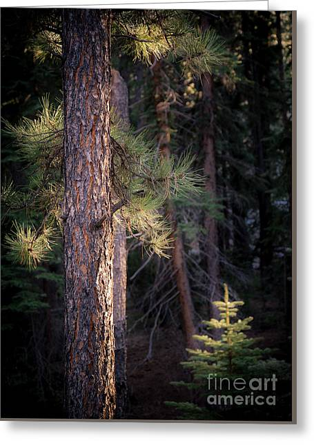 Last Light Greeting Card by The Forests Edge Photography - Diane Sandoval