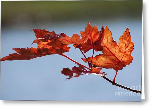 Last Of The Leaves Greeting Card by Joy Bradley