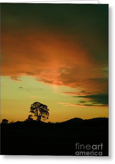 Last Rays Of Light Greeting Card by Angel  Tarantella