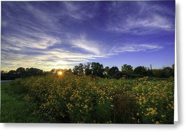 Last Rays Over The Flowers Greeting Card