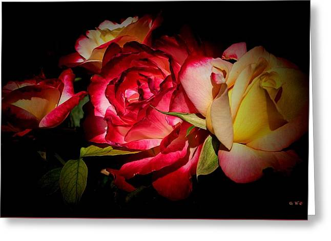 Last Summer Roses Greeting Card