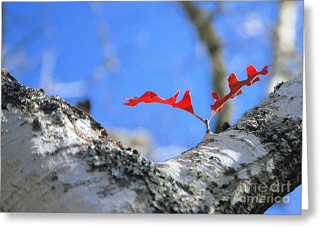 Last To Leaf Greeting Card by Debbie Karnes