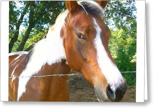 Last Week, I Met My First #horse! She Greeting Card