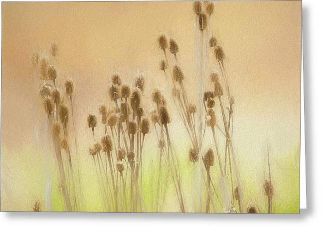 Last Years Teasels Greeting Card by Allen Kurth