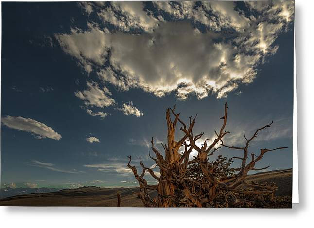 Greeting Card featuring the photograph Late Afternoon In The Bristlecone Forest by Tim Bryan
