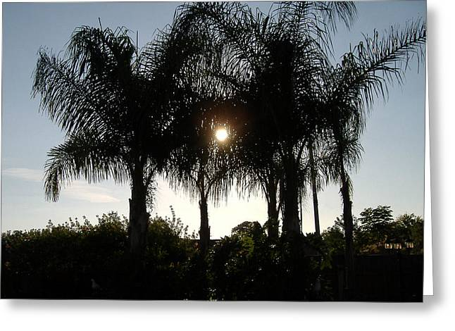 Greeting Card featuring the photograph Late Afternoon Sun by Diane Ferguson