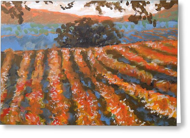 Late Afternoon Vineyard Greeting Card by Kip Decker