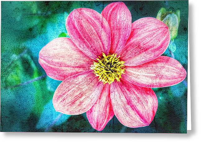 Late Bloomer Greeting Card by Kathleen Alhaug