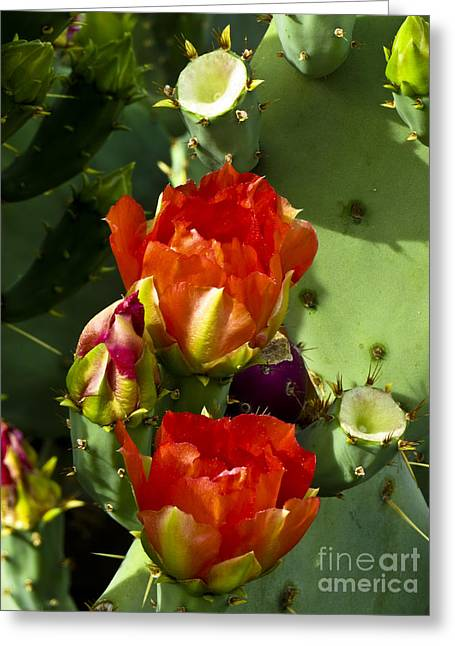 Late Bloomer Greeting Card by Kathy McClure