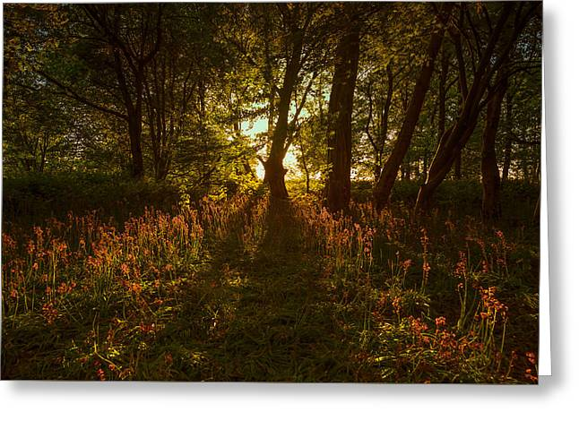 Late Evening In The Bluebell Wood Greeting Card by Chris Fletcher