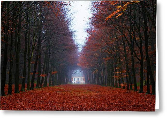 Late Fall Forest Greeting Card