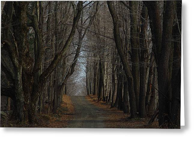 Cummington Greeting Cards - Late Fall Lane Greeting Card by Rosemary Wessel