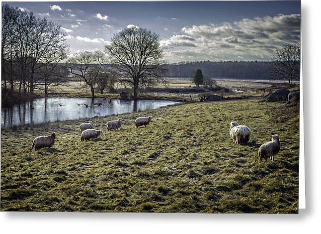 Late Fall Pastoral Greeting Card