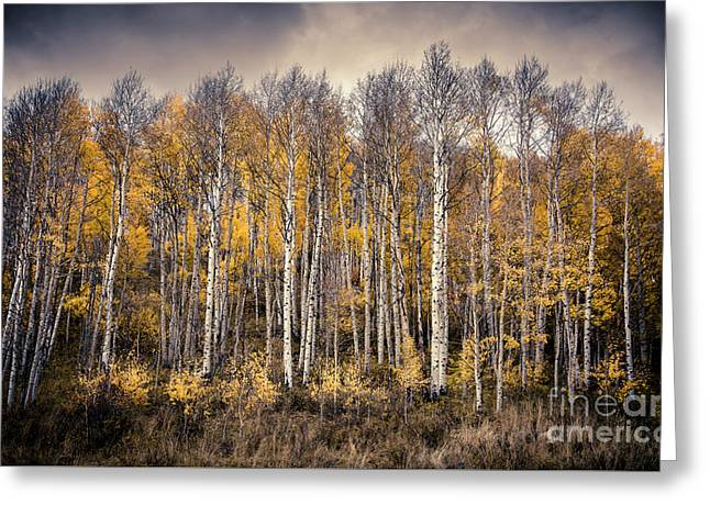 Greeting Card featuring the photograph Late Fall by The Forests Edge Photography - Diane Sandoval