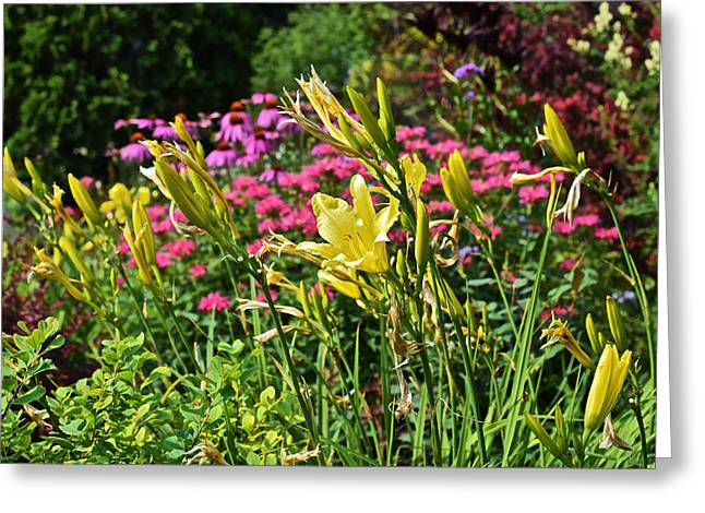 Late July Garden 1 Greeting Card