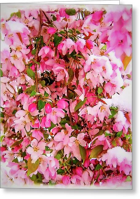 Late Snow Early Flowers Greeting Card