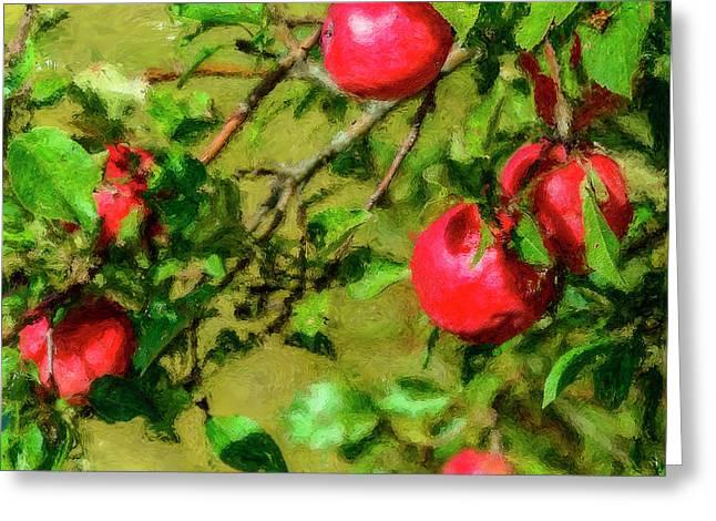 Late Summer Apples Greeting Card by Ken Morris