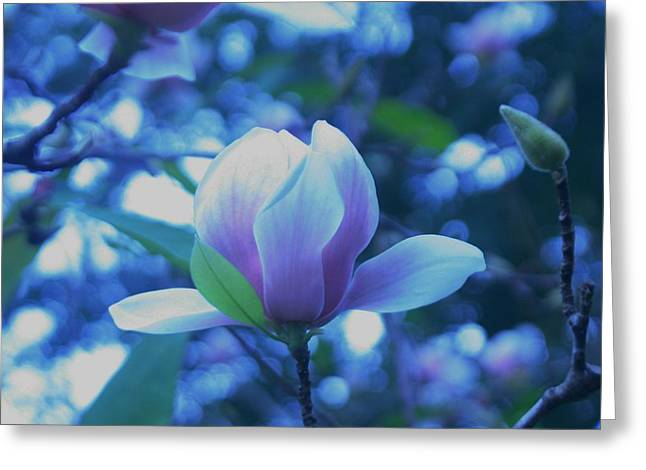 Late Summer Bloom Greeting Card by John Glass