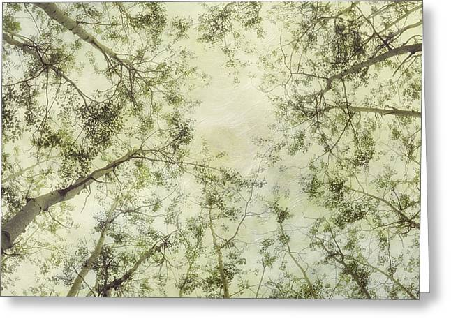 Late Summer Tree Tops Greeting Card