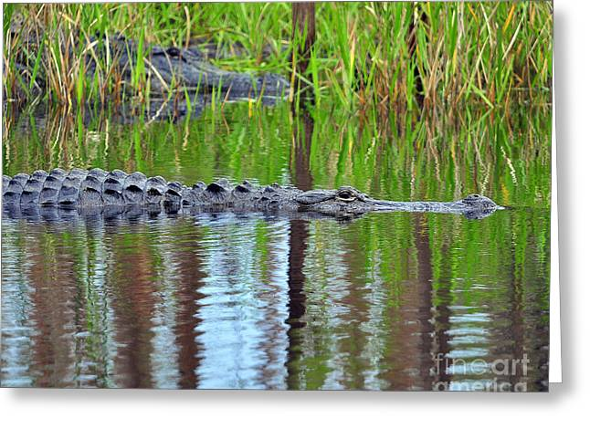Greeting Card featuring the photograph Later Gator by Al Powell Photography USA