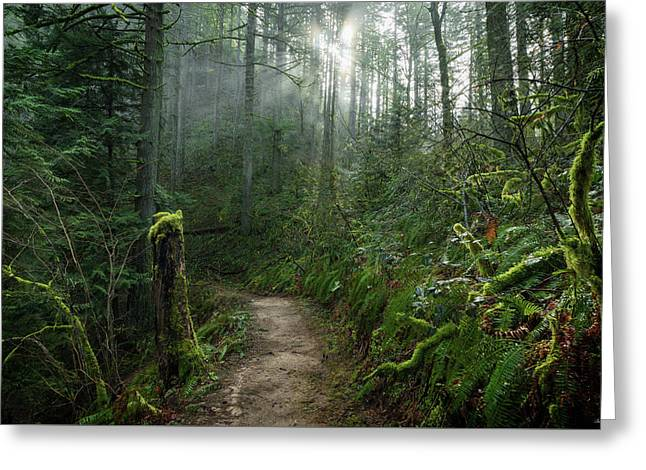 Latourell Trail Greeting Card by C Steele