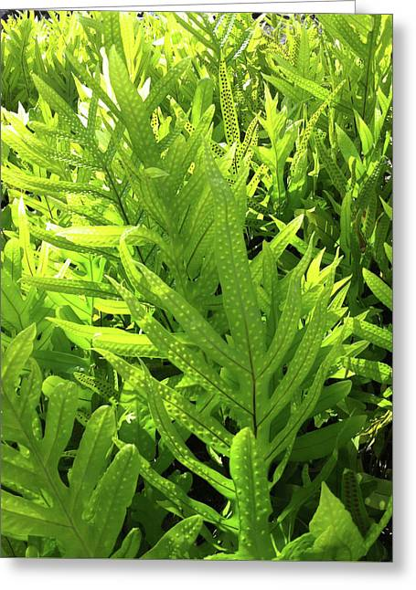 Lauae Fern Greeting Card