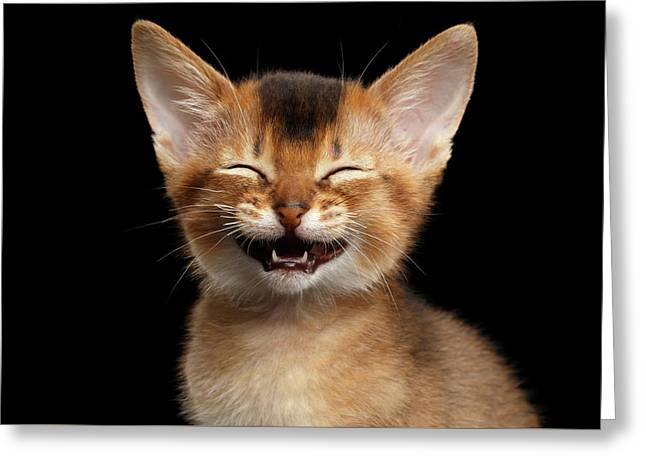 Laughing Kitten  Greeting Card