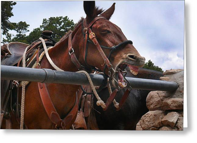 Laughing Mule Greeting Card