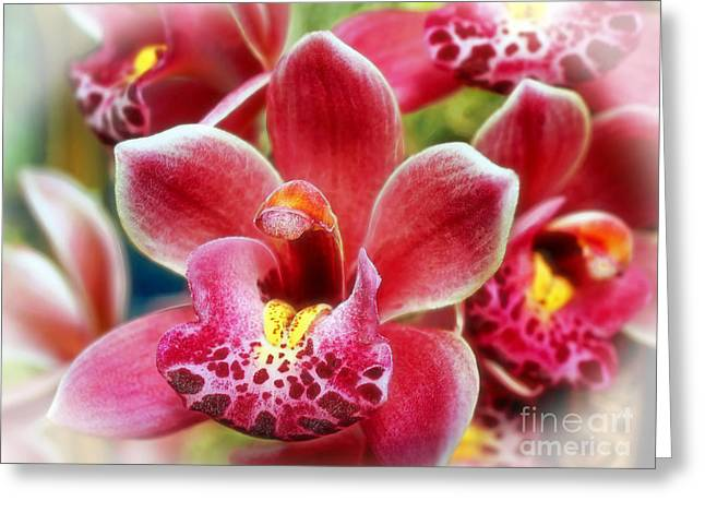 Laughing Orchids Greeting Card by Sue Melvin