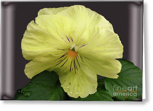 Greeting Card featuring the photograph Laughing Pansy by Donna Brown