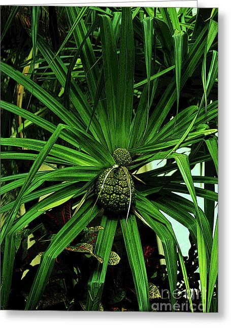 Lauhala Plant Greeting Card by Craig Wood