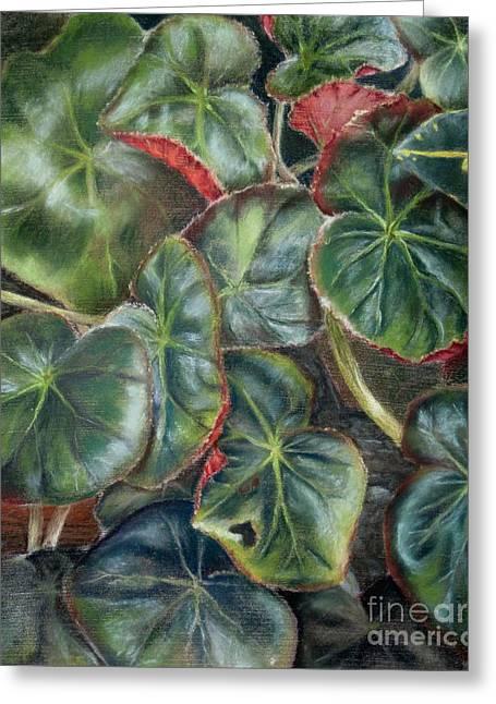 Laura's Begonia Greeting Card by Karen Boudreaux