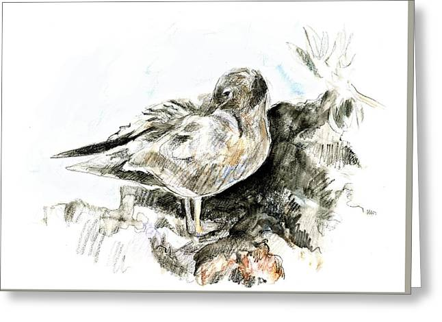 Lava Gull Greeting Card